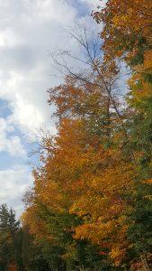fall-colors-2016
