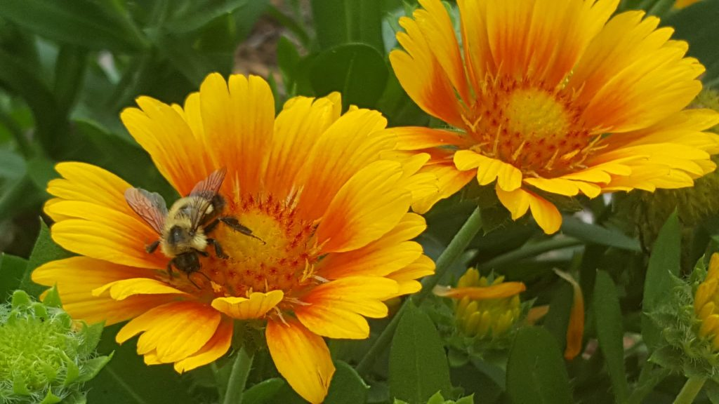 Bees Bees Bees - photo by Marybeth Mattson